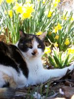 Calico in the Flowers07 by effing-stock
