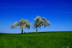 Two trees by maXXie15