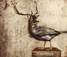 Deer bird by Krafla
