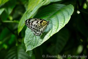 Rice Paper Butterfly by heytherejustine
