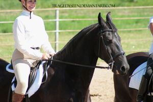 Friesian Stock 11 by tragedyseen