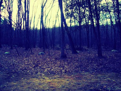 Woods in Massachusetts by Spoil-the-Tee-Tree
