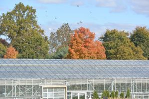 Farm Greenhouse and A Touch of Color 2 by Miss-Tbones