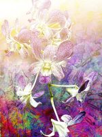 Orchids Lavender by Tackon
