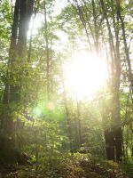deciduous forest and the warm sun by surtea