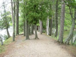 737 - trees by WolfC-Stock
