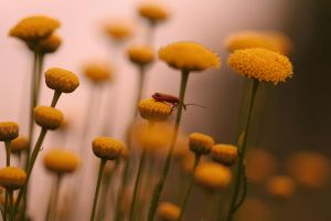 bug on a flower by archiejake