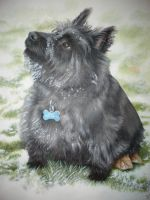 Max in the snow by petportraitman