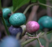 Turquoise, Fuschia Berries by froggynaan
