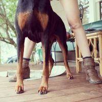 Crystal Holmes and Frosty the Doberman 1 074427 by EdwinLMunt