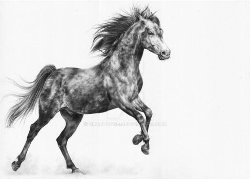 Horse Drawing by CKArtpage