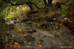Stenner Creek in October by twelvemotion