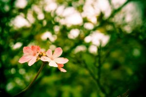 Little Blossoms by one-happy-camper