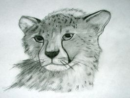 Cheetah cub by Shadow--wolfie