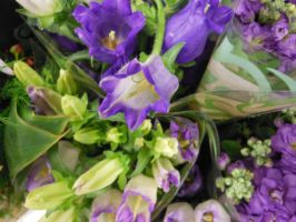 Grocery-Store-Flowers-I-017 by amethystmstock
