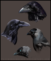 Bird study (jackdaws and ravens) by Missleepify