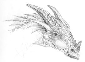 Dragon Portrait Sept 20, 2007 by Scyndariel