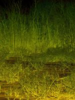 Swamp Texture 01 by dknucklesstock
