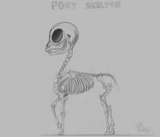 Pony skeleton by Alumx