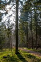 In the forrest by bibamus-pd