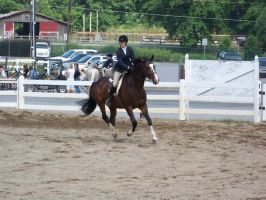 Horse show stock 7 by shush-stock
