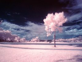 ir front yard by foodshelf