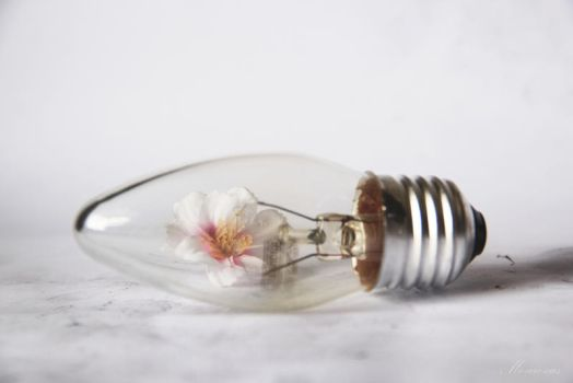 Bulb of a Flower by me-are-cus