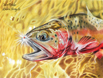 Greenback Cutthroat Trout by MorRokko