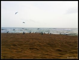 Crows or Black Seagulls by nikster08