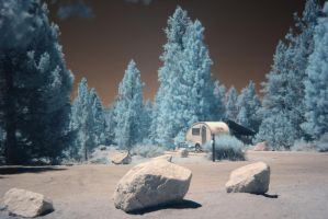 Infrared Trees by No-Reservation-Photo