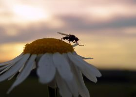 Sunset Fly II by Bhesi