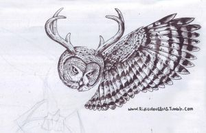 owl wip by RidiculousArts