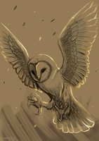 barn owl wip by Faezza
