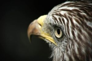 Eagle Eye 2 by cwaddell