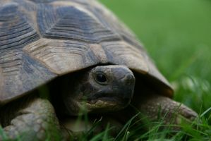 Turtle by Storm1287