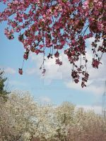 Crab Apple Branches by Elle-Arden
