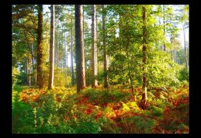 Autumn Tranquility by Forestina-Fotos
