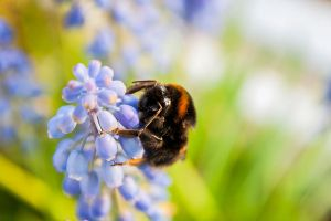 Bumble in the Sun by Hiersein