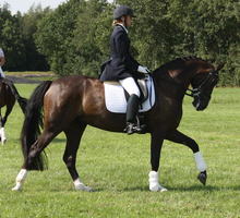 Dressage stock 2 by ByMelody