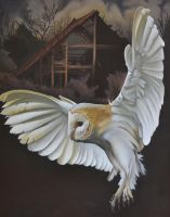 barn owl by georgeayers2000