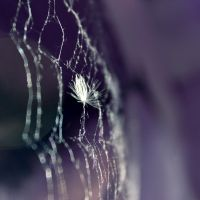 Caught in a web by Karol-Dee