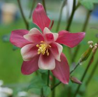Pink flower stock by Cathorse-stock