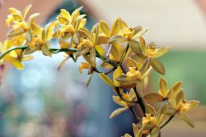 Orchids III by ribbonworm