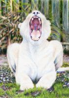 3.29: Laughing Lioness by theperian