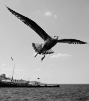 Proud To Be A Seagull by GiorgosMaravelakis