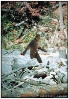 Squatchbacca (Chewbacca / Bigfoot) by Rabittooth