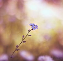 forget-me-not by YourFavoriteProfil
