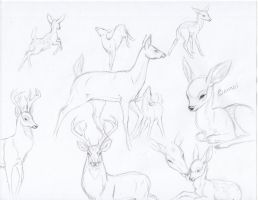 Bambi/Deer sketches by mysteriouswhitewolf