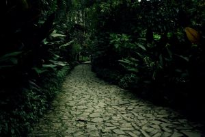 Path by MonPineapple