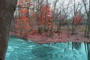 HDR Creek photo by PrimmRose